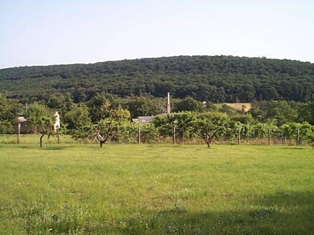 Felsőörs- Öreg hegy szőlős területi részén, csendes nyugodt környeze? 1
