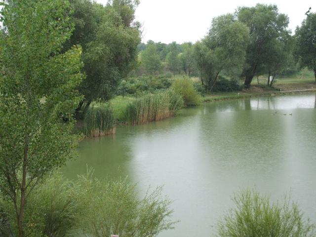 Pápa melletti csendes falu határán 54000 m2-es területen lévő szabad… 1